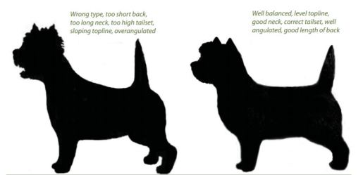 correct breed type